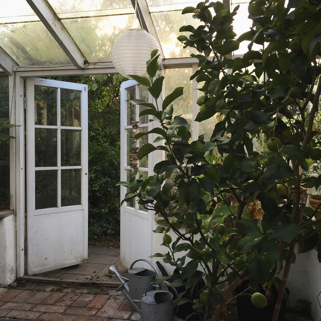 In my greenhouse vxthus sweden lemontree Continue reading rarr