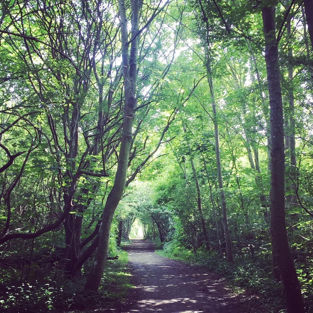 Fint i skogen  On a green walk at homehellip