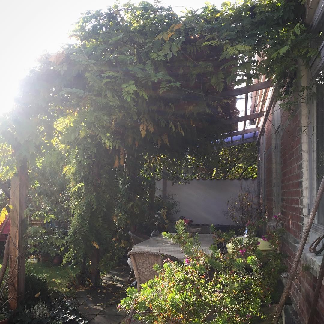 Vildvuxet   at home october wisteria sweden Continue readinghellip