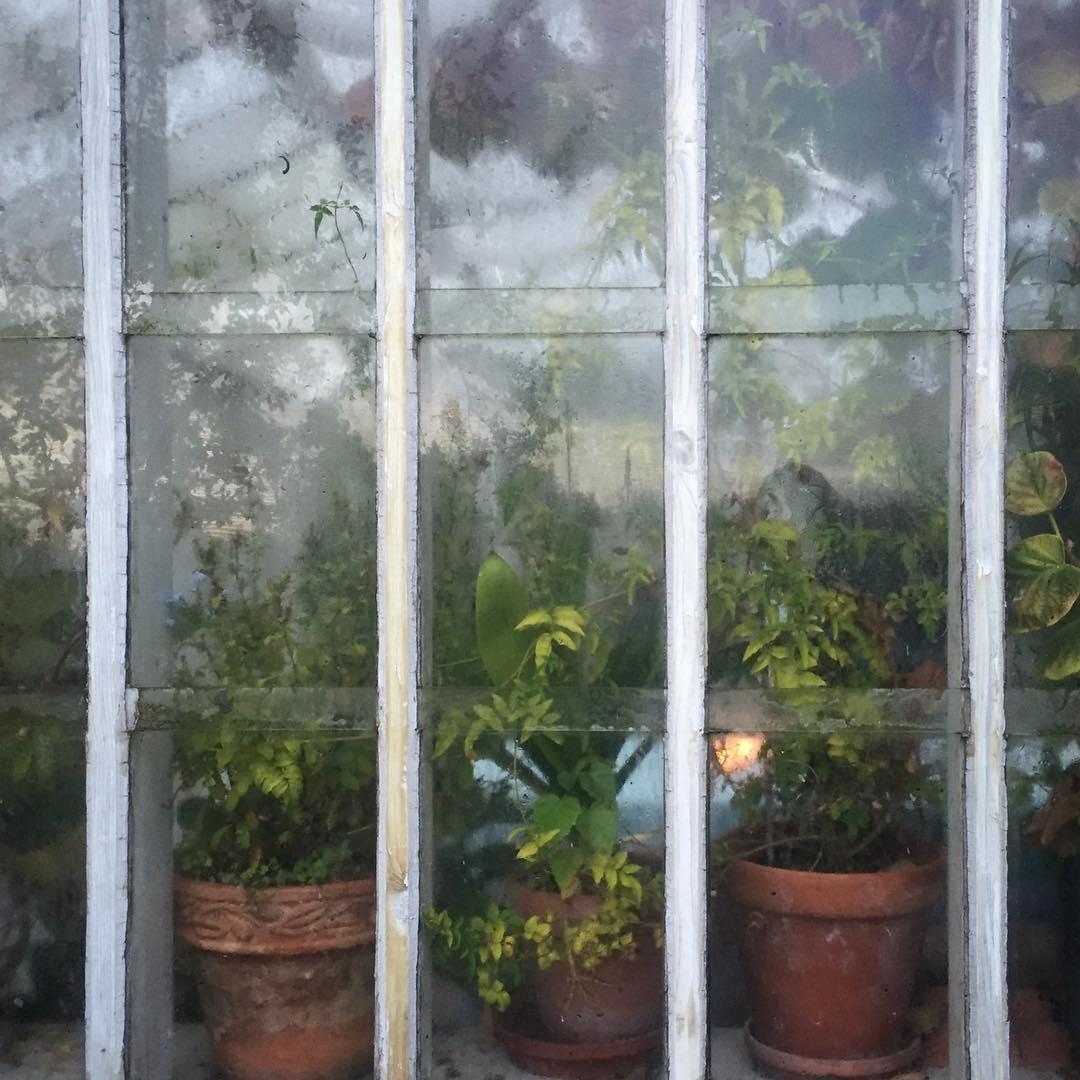 Kvllen kommer fort   evening at home greenhouse swedenhellip