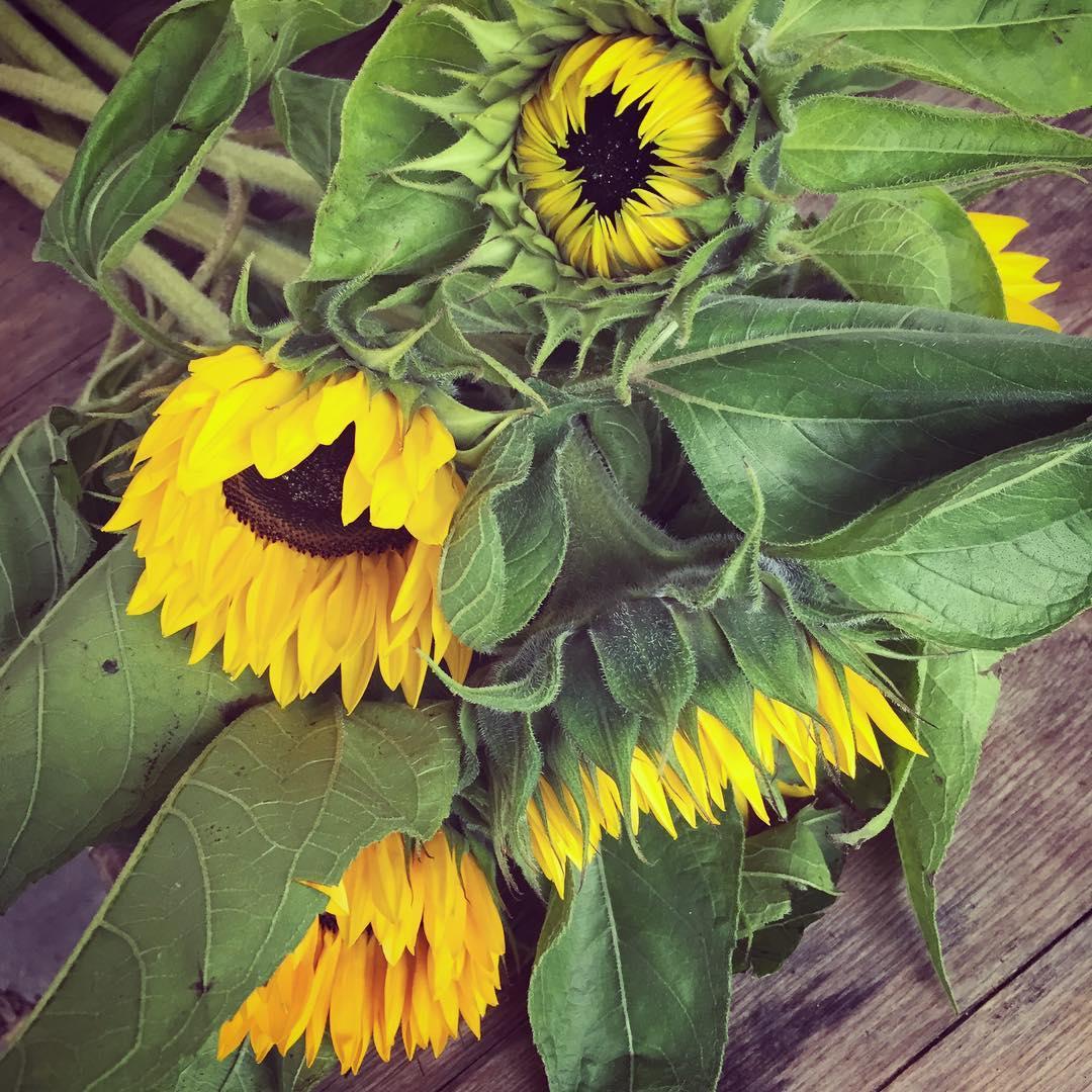 Kunde inte motst  frukthandlarnplimhamn  monday bouqet sunflowers solroshellip