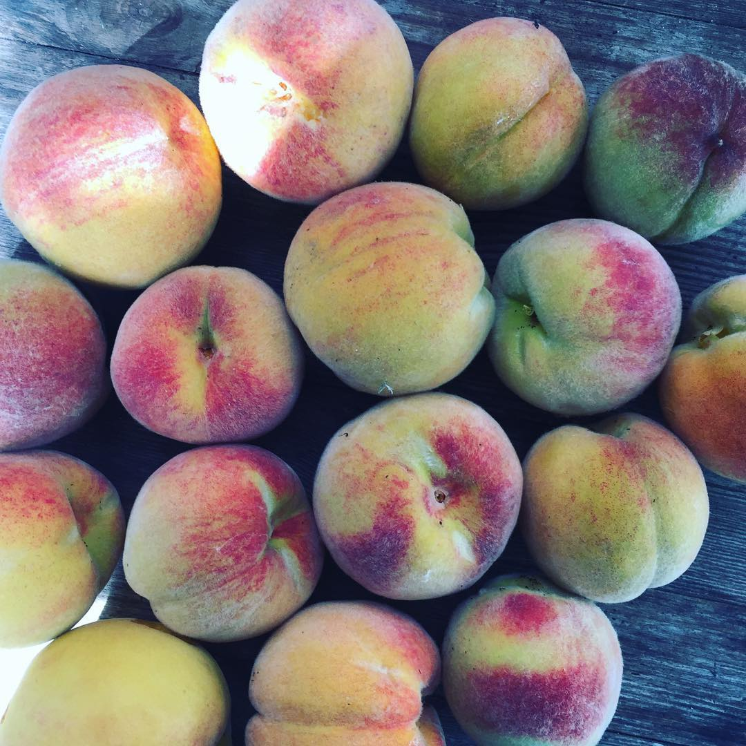Dagens skrd  todays harvest peach in my garden persikotrdhellip