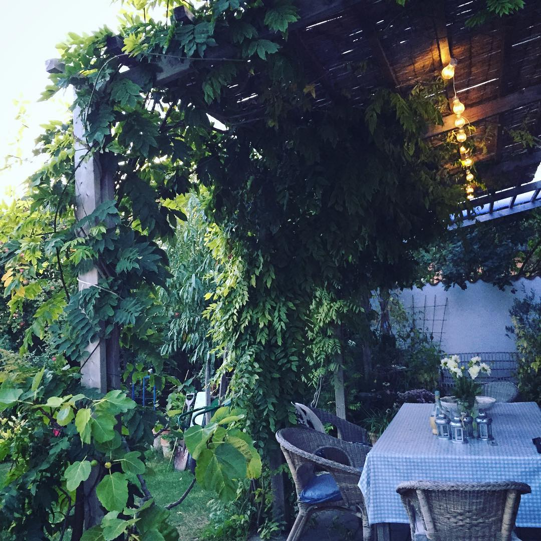 Evening at home still very green pergola sweden Continue readinghellip