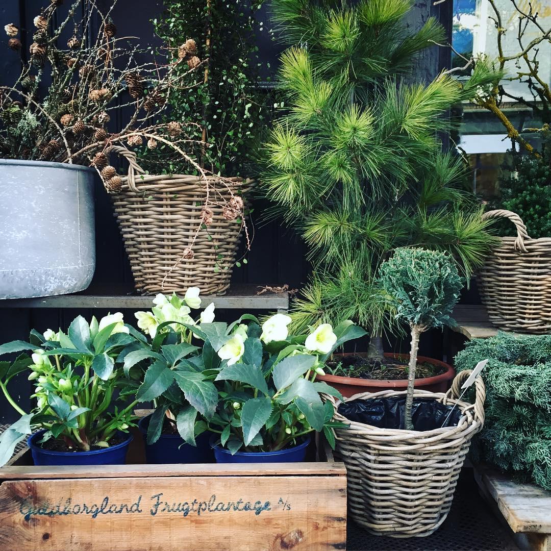 Inspiration day in copenhagen blomsterskuret Continue reading rarr