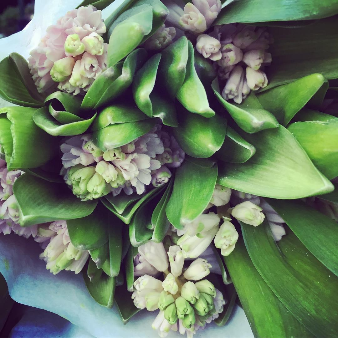 Allra finaste snitthyacinterna!  love flowershops in copenhagen hyacinth hyacinthellip