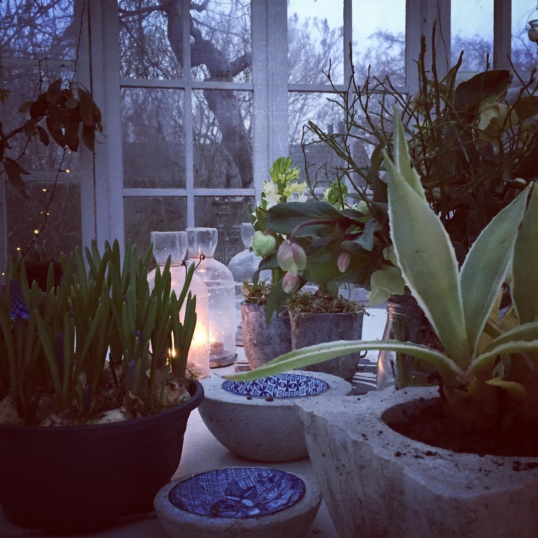 En stund i vxthuset  in my greenhouse vxthus swedenhellip