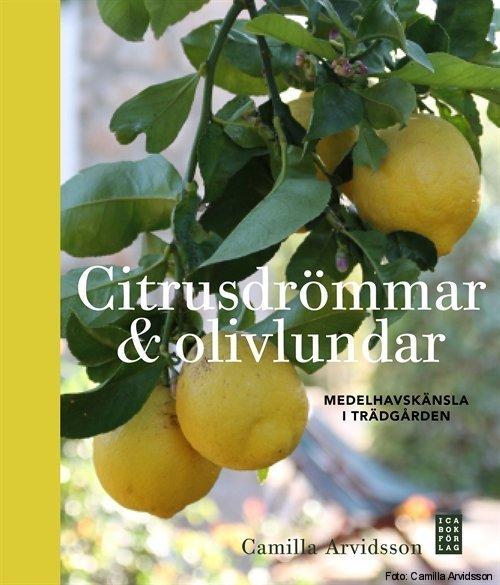 citrusdrommar_olivlundar-arvidsson_camilla